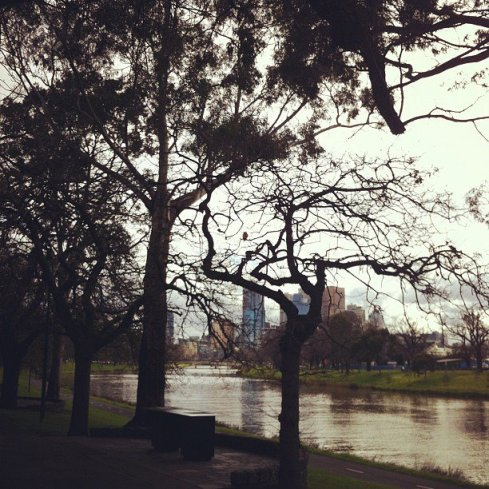 trees by the yarra
