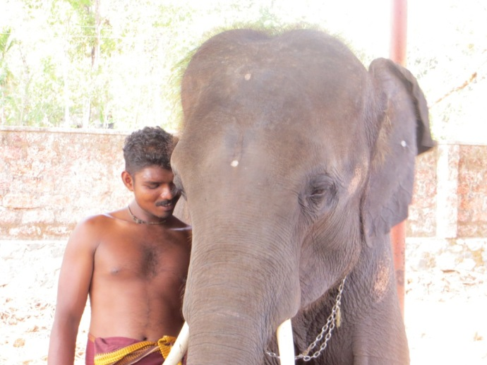 Shiva and his mahout